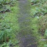 森の中での動き方、歩き方