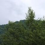 オオクワガタ檜枝岐採集の変遷