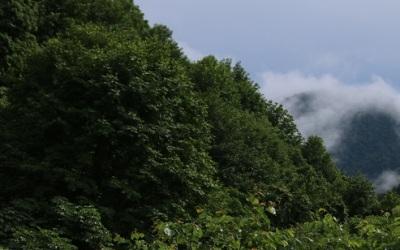 スカウトの世界、森の入口付近の歩き方 -気を抜くと痛い目にあいます-