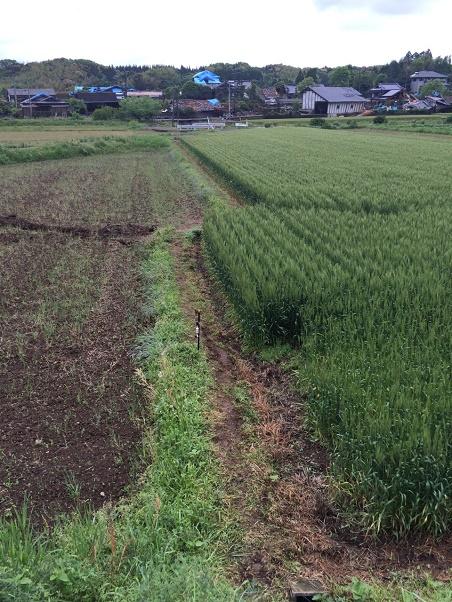 熊本地震の特性、余震の連続と避難行動、どのようにすればいいか