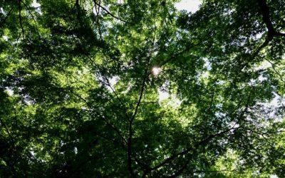 森の中での行動 -匂いの特性と溶け込み方-