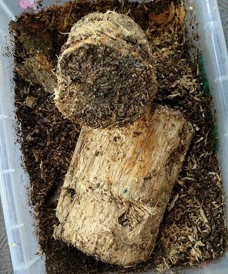 オオクワガタマット飼育-フスマが手に入りにくい年のフスマの入手法-