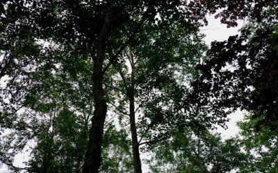 スカウトの世界、森の歩き方 -山伏(やまぶし)と歩く-