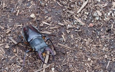 クワガタ、カブトムシ採集を親子で楽しむ-クワガタ・カブトムシの発生時期を知る-