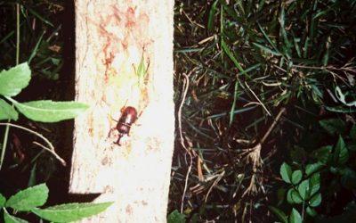 クワガタ、カブトムシ採集を親子で楽しむ-採集時間を知る-