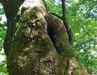 間もなくkindle本発刊します『天然オオクワガタを求めて-山梨県韮崎一帯採集記-』