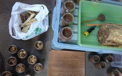 オオクワガタデータ飼育-産卵木の割り出し